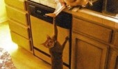 just holding it back cat eating chicken animal funny pics pictures pic picture image photo images photos lol