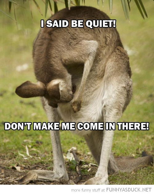 kangaroo animal looking pouch don't make me come in there funny pics pictures pic picture image photo images photos lol