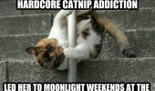 lap dancer cat animal addicted catnip funny pics pictures pic picture image photo images photos lol
