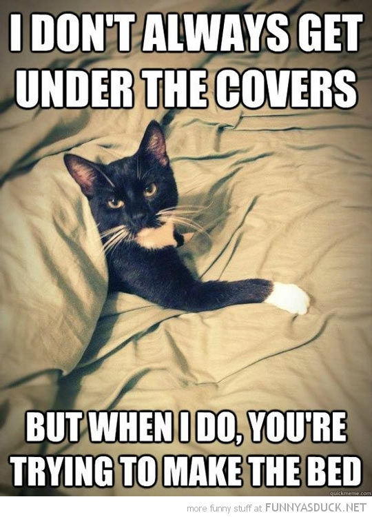most interesting cat meme animal get under covers make bed funny pics pictures pic picture image photo images photos lol