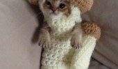 mushroom costume cat kitten animal take the photo quick funny pics pictures pic picture image photo images photos lol