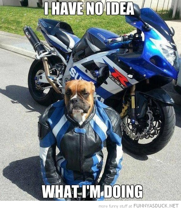 no idea what i'm doing dog animal motor bike cycle leathers funny pics pictures pic picture image photo images photos lol