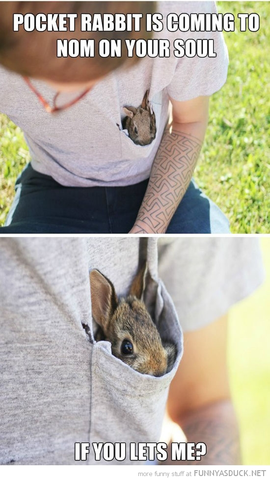 pocket rabbit nom your soul animal funny pics pictures pic picture image photo images photos lol