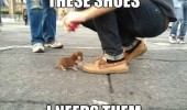 puppy dog animal these shoes I need them funny pics pictures pic picture image photo images photos lol