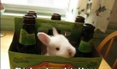 rabbit animal beer has lot of hops pun funny pics pictures pic picture image photo images photos lol