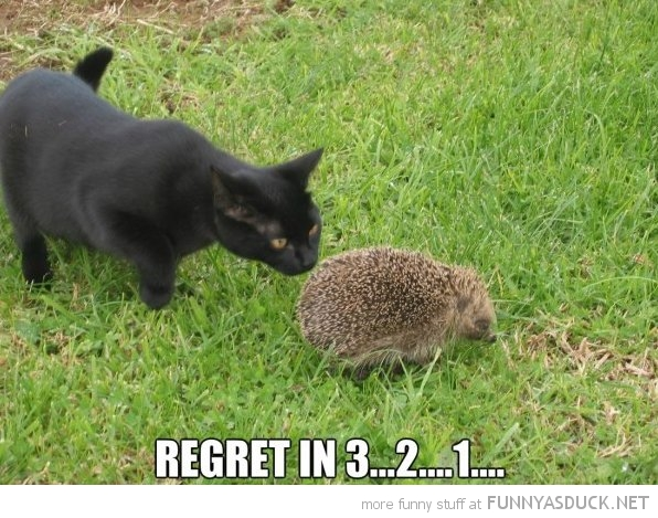 regret soon cat animal hedgehog funny pics pictures pic picture image photo images photos lol