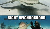 shark high five right neighborhood bro animal funny pics pictures pic picture image photo images photos lol