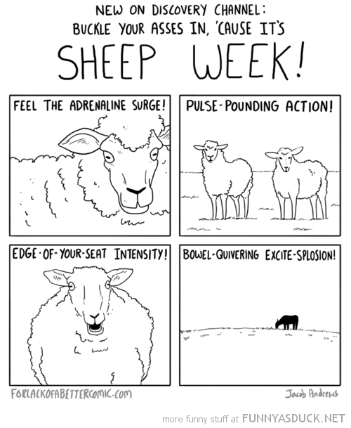 Sheep Week