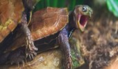 shocked turtle tortoise animal hey get tail out of there funny pics pictures pic picture image photo images photos lol