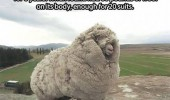 shrek sheep animal hid cave 6 years  funny pics pictures pic picture image photo images photos lol