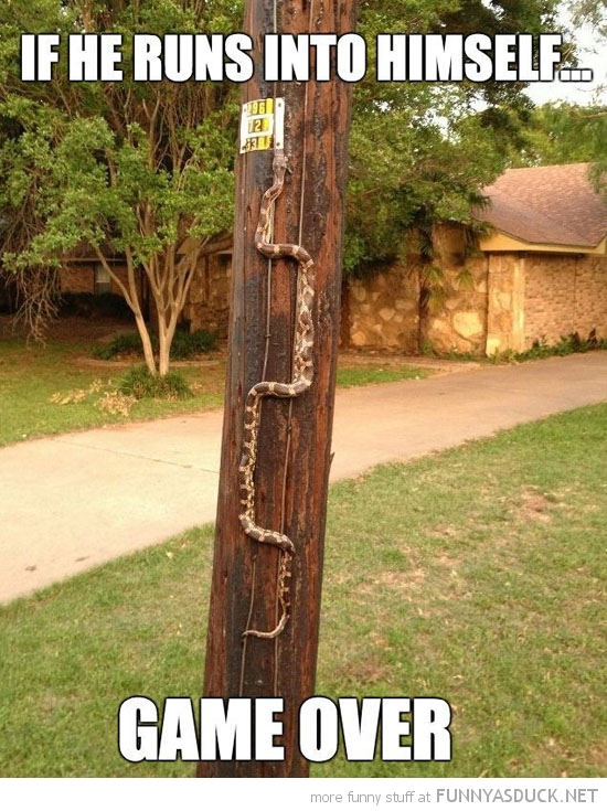 snake climbing tree animal runs into himself game over gaming nokia funny pics pictures pic picture image photo images photos lol