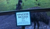 school kids named emu bird animal zoo spazzie mcgee  funny pics pictures pic picture image photo images photos lol