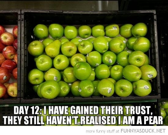 apples still do not know I am a pear funny pics pictures pic picture image photo images photos lol