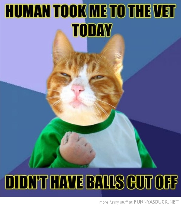 success cat meme took me to vet didn't have balls cut off funny pics pictures pic picture image photo images photos lol