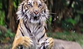 tiger jumping water animal huge mistake how i feel other woman with my boyfriend comic funny pics pictures pic picture image photo images photos lol