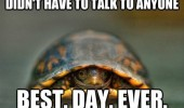 turtle hiding shell didn't talk to anyone best day ever animal how i feel other woman with my boyfriend comic funny pics pictures pic picture image photo images photos lol