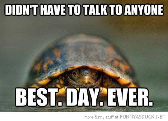 Introvert Turtle