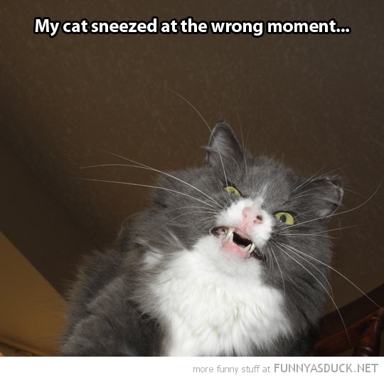 cat sneezed wrong moment animal funny pics pictures pic picture image photo images photos lol
