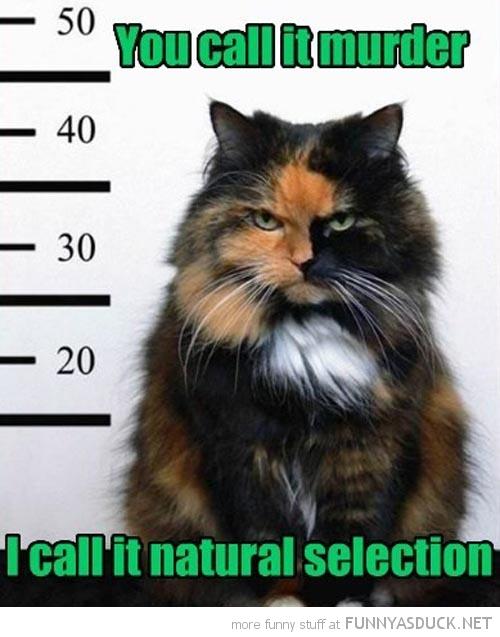 funny-cat-animal-mug-shot-murder-natural