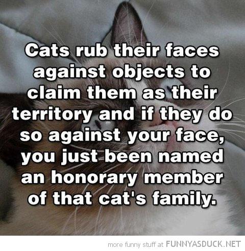 Cats Rub Their Faces