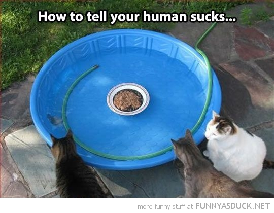 Your Human Sucks
