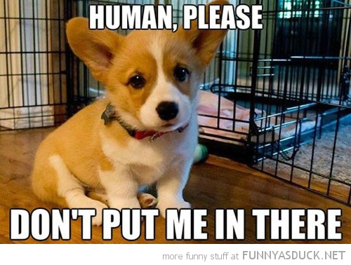 Human, Please