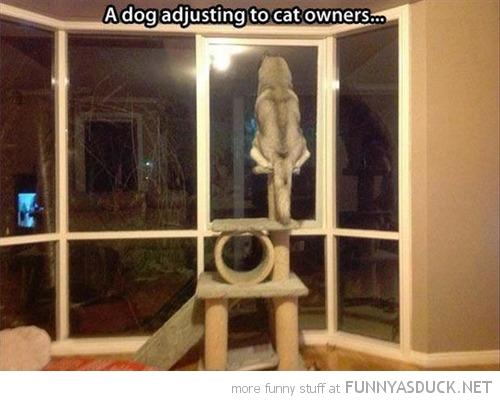 A Dog Adjusting