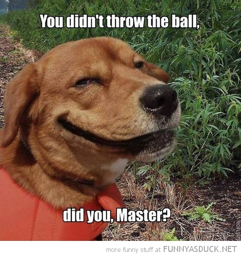 You Didn't Throw The Ball