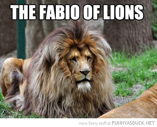 The Fabio Of Lions