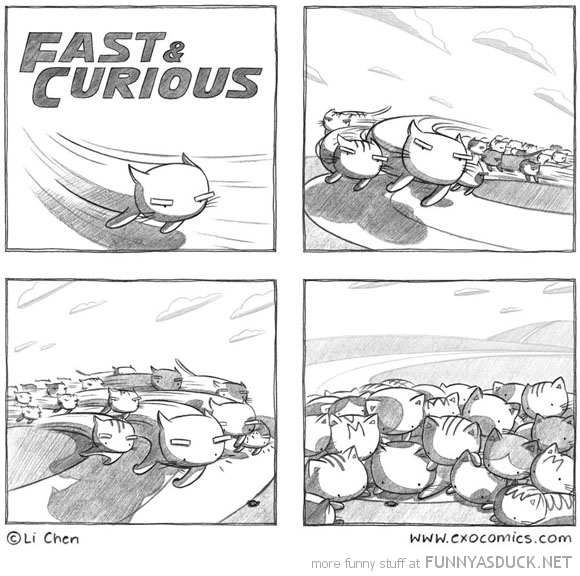 Fast & Curious