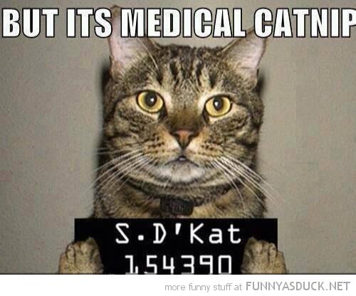 Medical Catnip