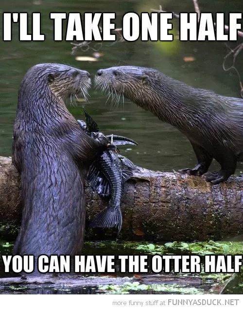 I'll Take One Half
