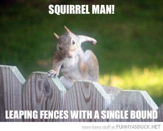 Squirrel Man