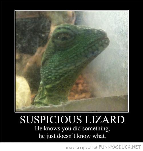 Suspicious Lizard