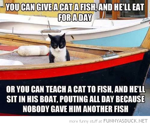 funny-teach-a-cat-to-fish-animal-boat-pi