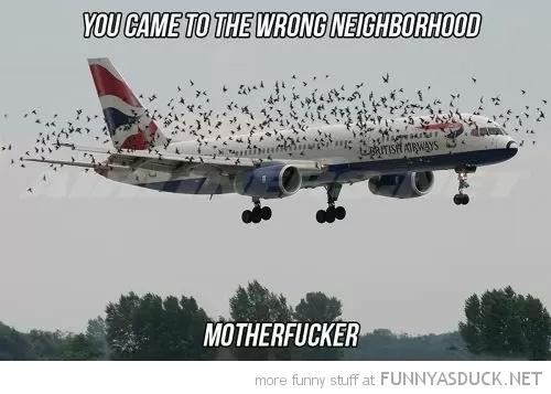 The Wrong Neighborhood