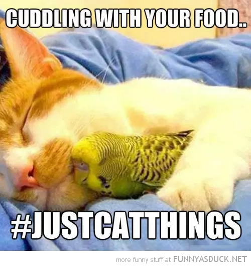 Cuddling With Your food