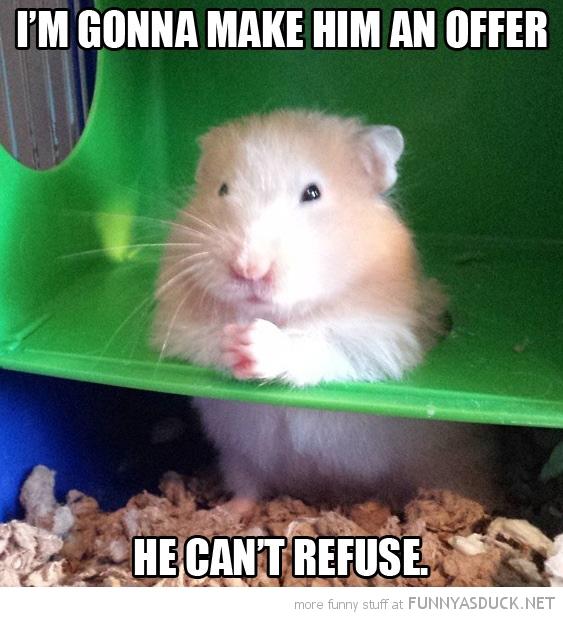 Hamster Don