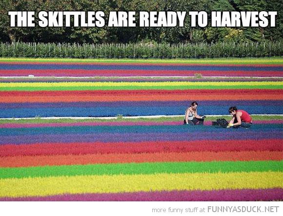 Skittle Harvest