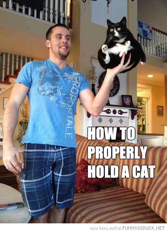 Hold A Cat