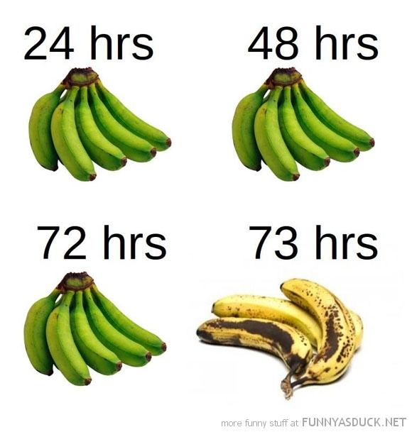 The Life Of Bananas