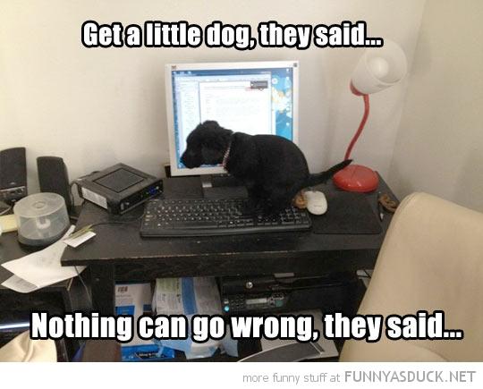 Get A Little Dog