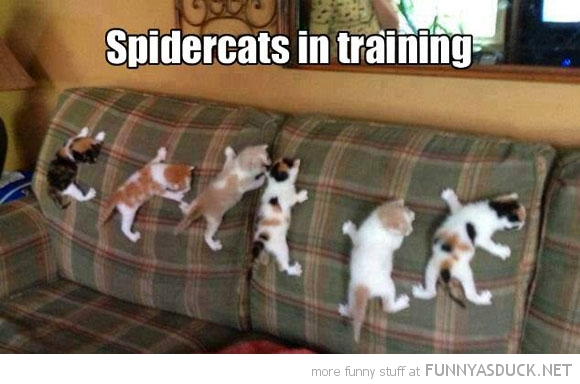 Spider Cats
