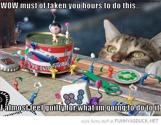 Almost Guilty Cat