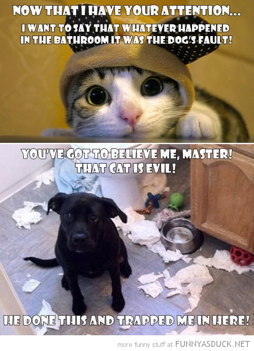 The Cat Is Evil