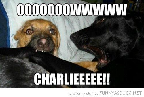Charlie!!