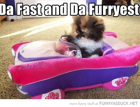 Racer Kitty