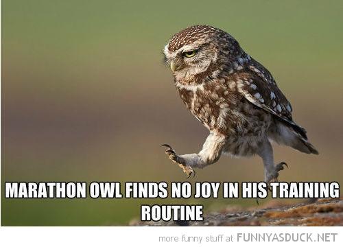 Marathon Owl