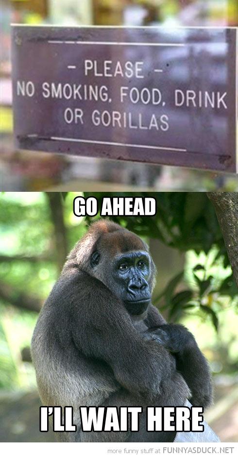 No Gorillas
