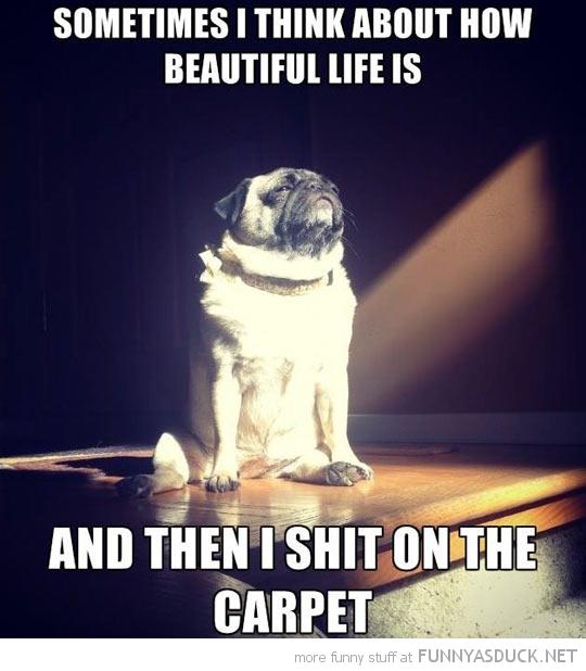 Enlightened Pug